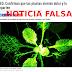 """NOTICIA FALSA: """"Confirman que las plantas sienten dolor y lo comparten"""""""