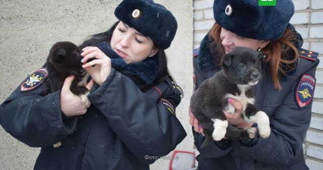 Машинист не ожидал увидеть на рельсах брошенных щенков! В Хакасии спасли щенков от мучительной смерти!