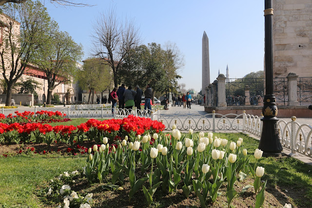 Colouful Tulips can be seen all over Hippodrome and Sultanahmet in Istanbul, Turkey