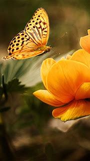 wallpaper bunga dan kupu kupu untuk mobile whatsapp hd