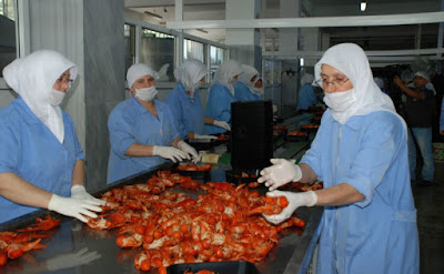 Our Profile : Indonesia Lobster Supplier -  Live Lobster Supplier Indonesia, Lobster Nutrition and Lobster Farming