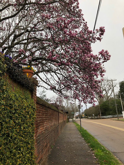 blossoms on tree above brick wall