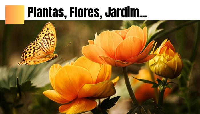 Plantas, Flores e Jardim
