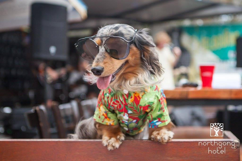 2019 Australian Dog Events & Pet Expos | Australian Dog Lover