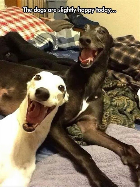 Funny Slightly Happy Dogs Joke Picture
