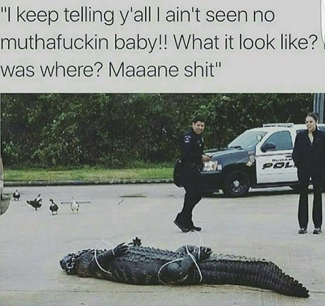 black crocodile joke