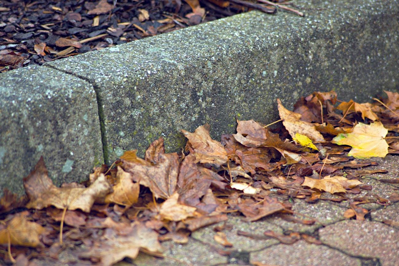 Mit einem 1€ Zoom-Objektiv durch den Herbst (1)