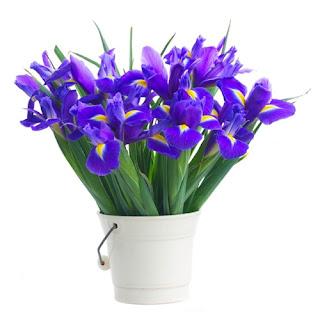 iris-buket