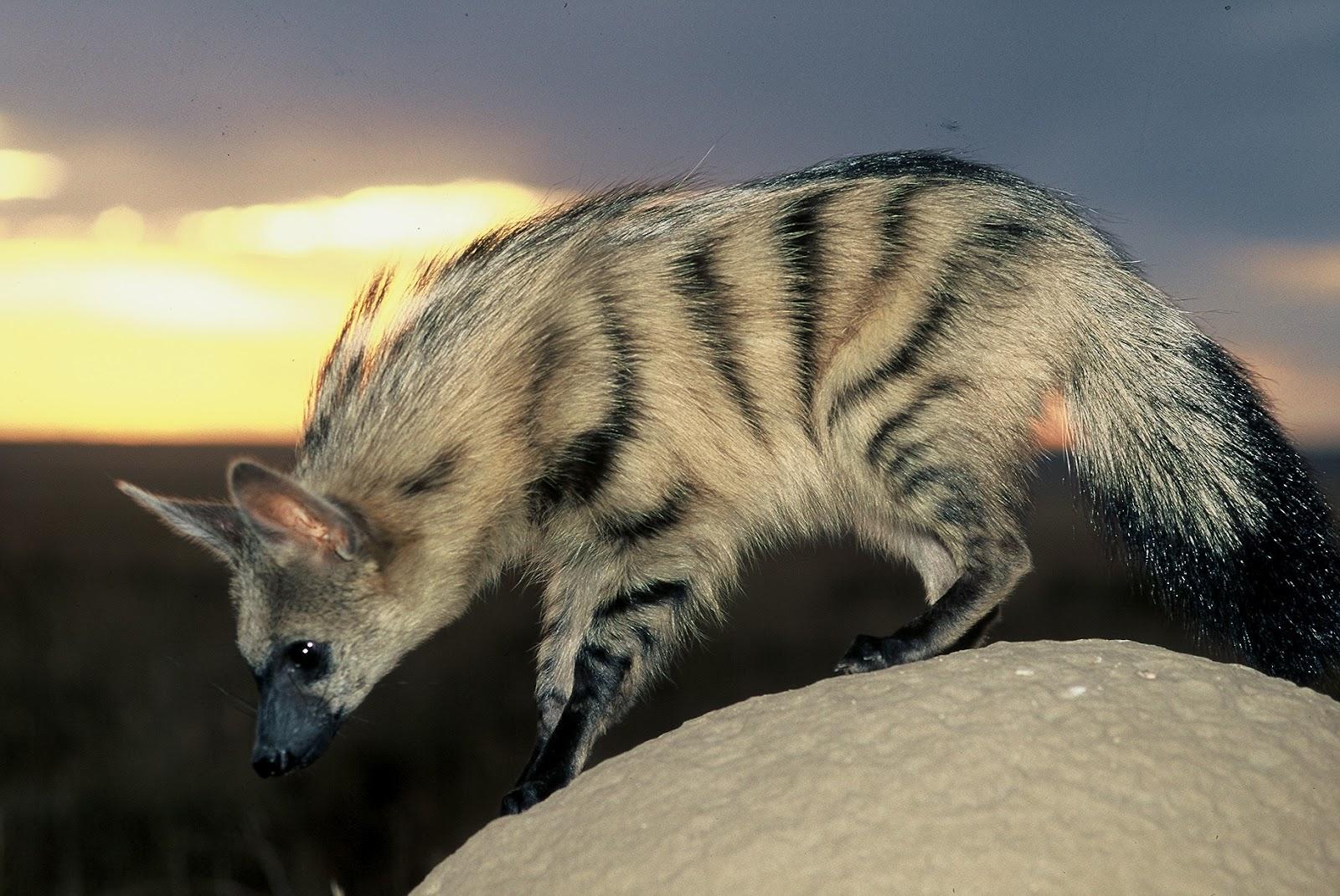 Bella lista di animali africani safari animali africani-4315
