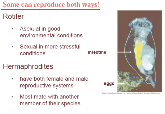 sexual reproduction,offspring,meiosis,diploid,external fertilisation,internal fertilisation,