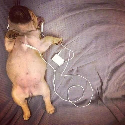 Funny iPod Puppy Dog Joke Picture