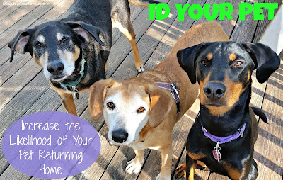 3 rescued dogs with dog tags