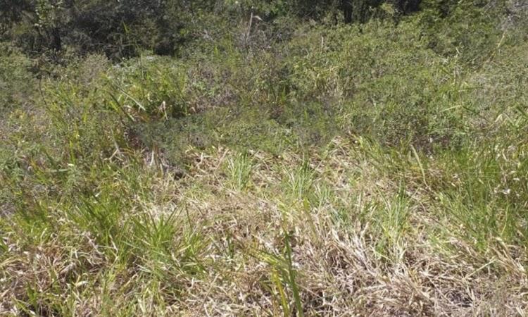 Dois corpos em estado de decomposição são encontrados na Chapada Diamantina