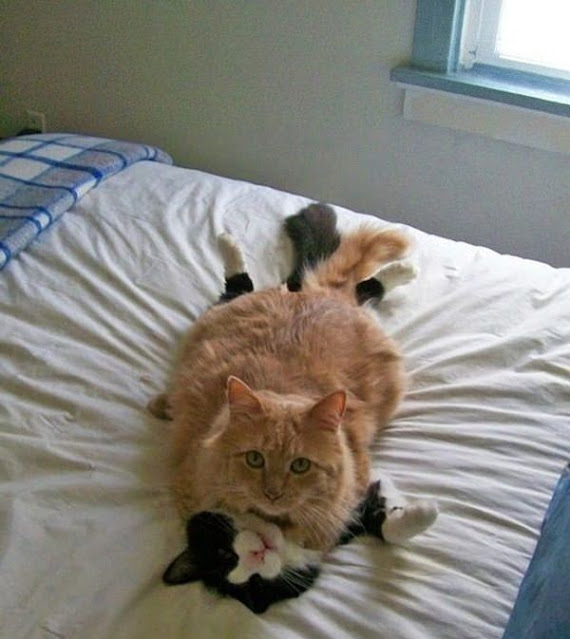 صور قطط صغيرة