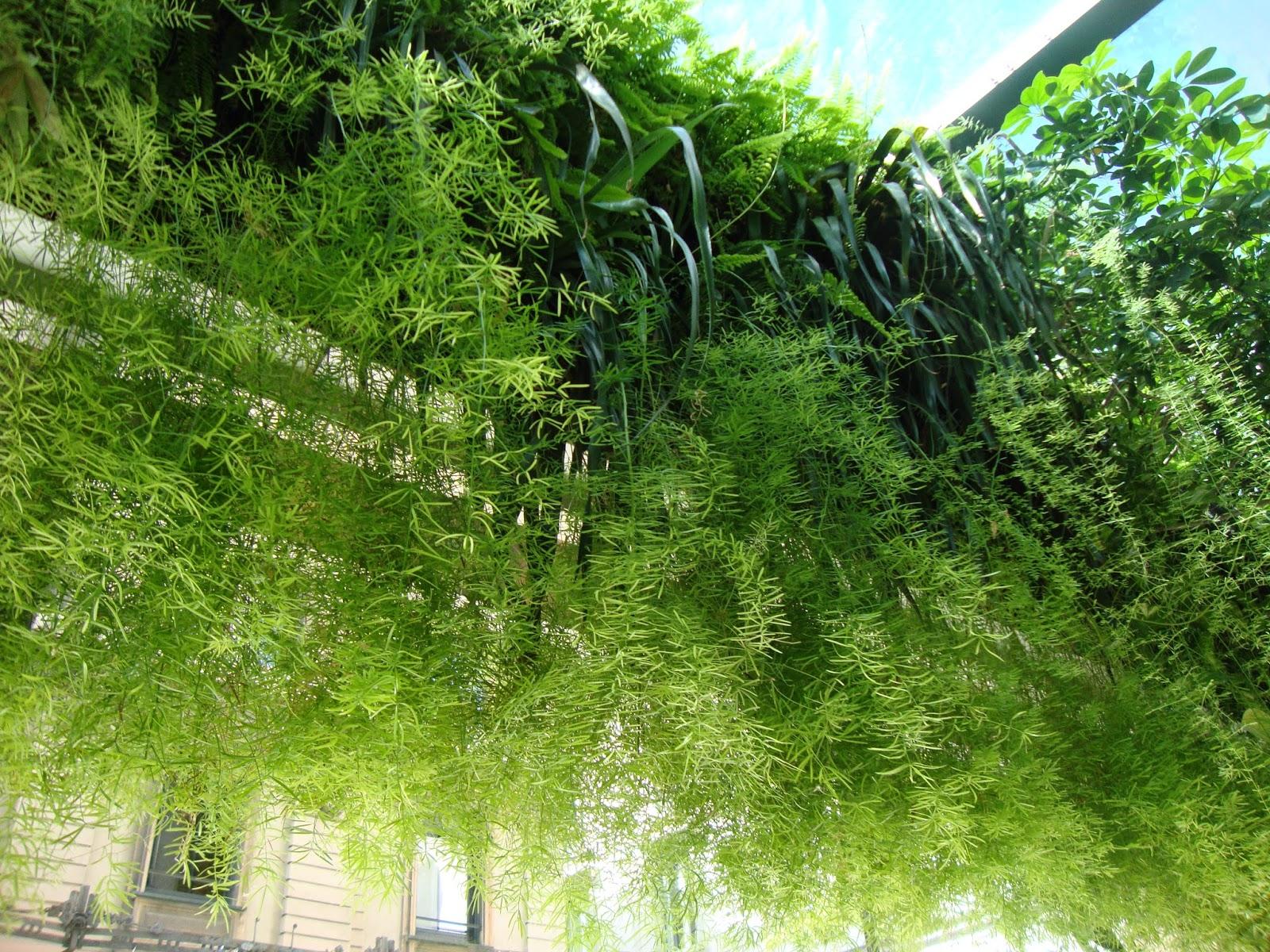 Un piccolo giardino in citt il giardino verticale di - Giardini verticali interni ...