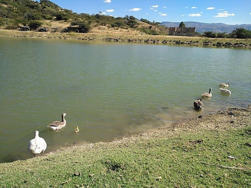 Laguna de Ponte de Cajabamba