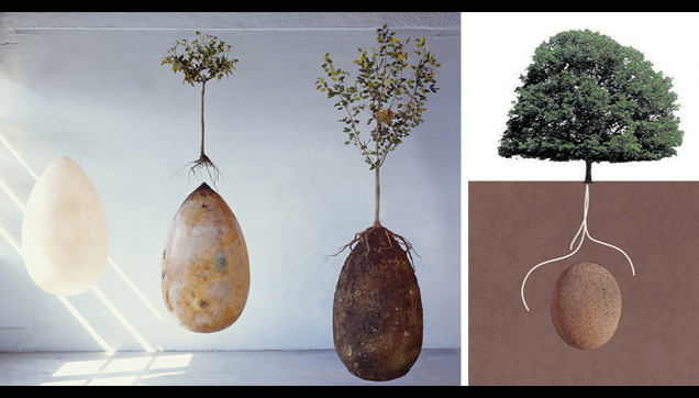 The seeds or burial pods that will hold a deceased human body for burial.