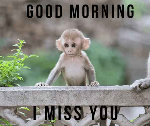 good morning wishes with small monkey image i miss you