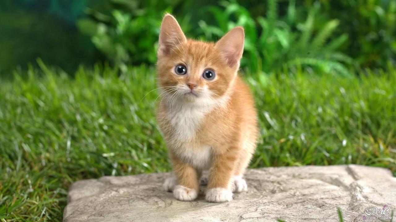 صور حيوانات اليفة للمنزل وخلفيات للحيوانات الأليفة 2021