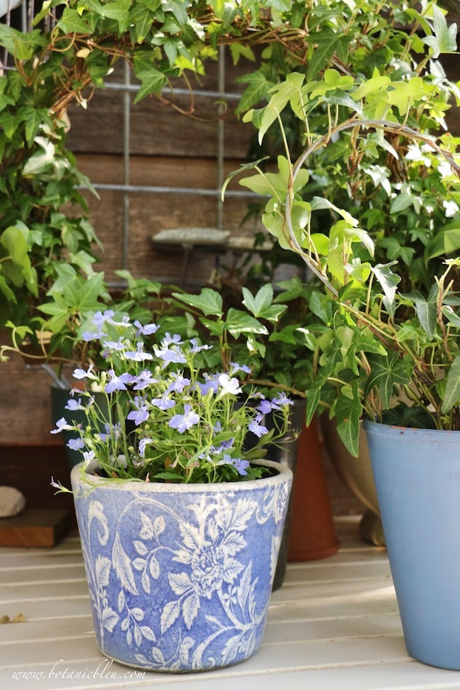 French Country Spring potting table with blue lobelia in a blue and white pot