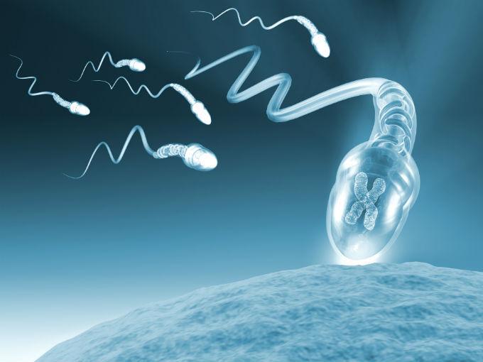 Llegar el horas cuantas en al espermatozoide ovulo demora se