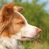 10+1 skvělé video s psími triky
