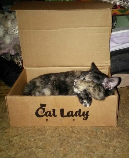 Tortie cat in a cat lady box.