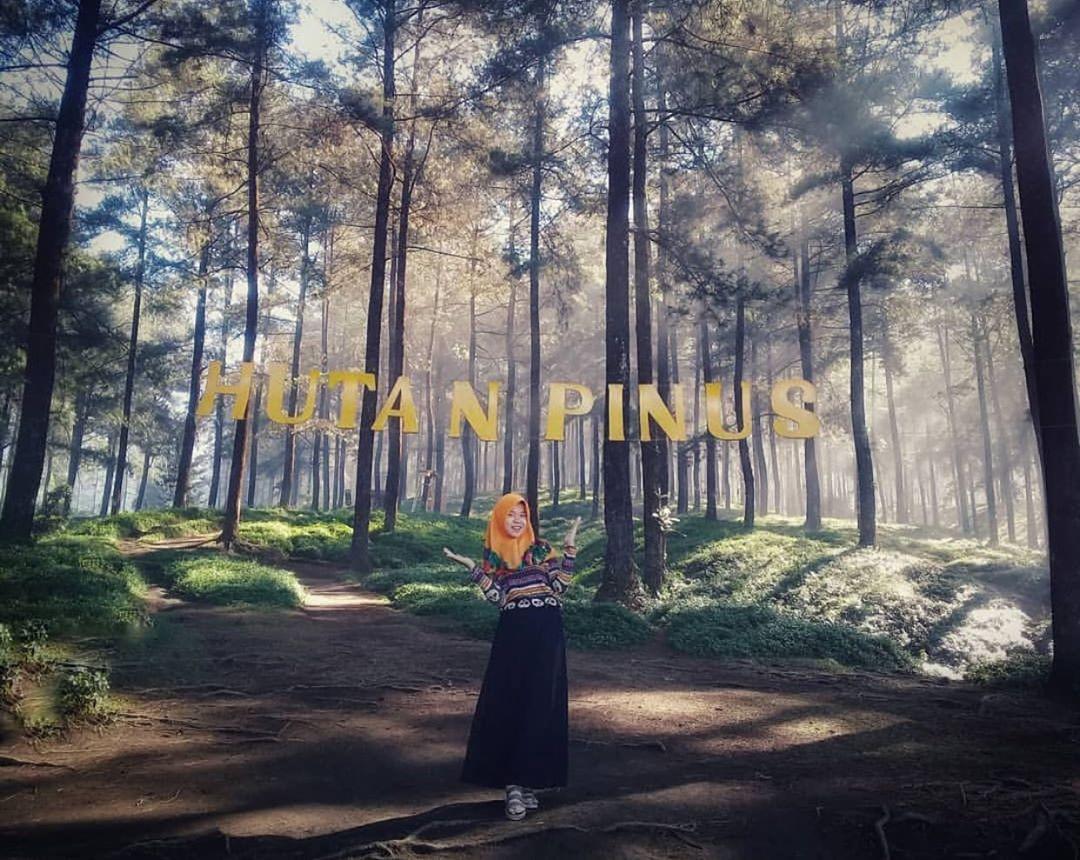 Harga Tiket Masuk dan Lokasi Hutan Pinus Limpakuwus Banyumas