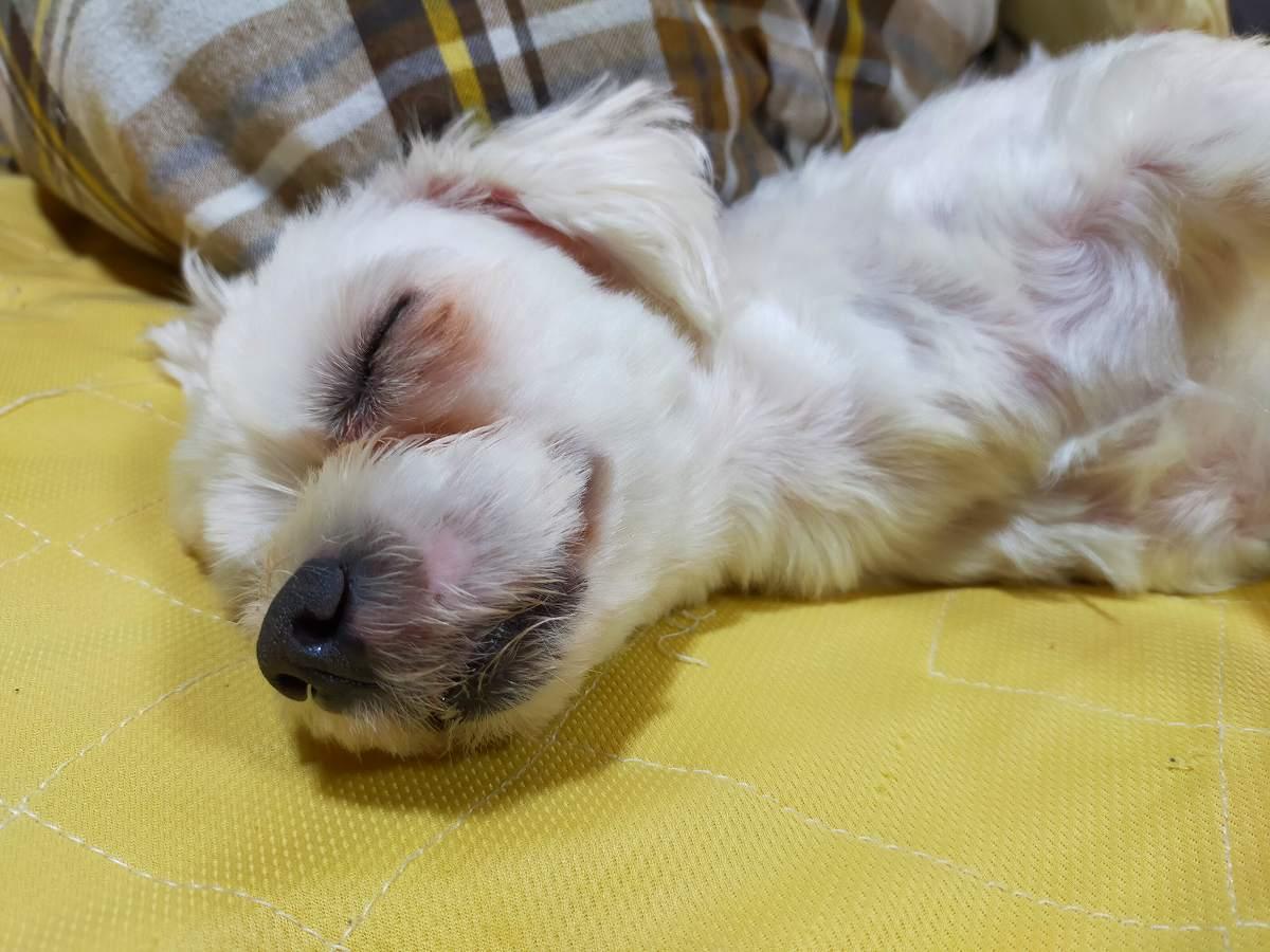 おやすみなさい。