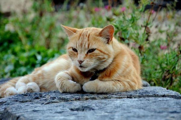 photos de chats de france