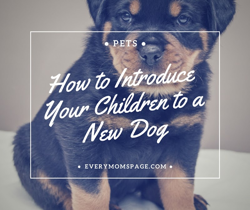 How to Introduce Your Children to a New Dog