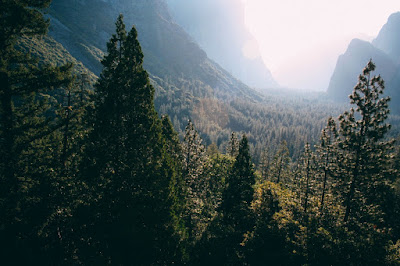 Bahaizm, religia, sacrum, las, drzewa, natura, bóg, monoteizm