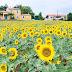 Primavera: saiba onde encontrar os cantos mais floridos da Europa