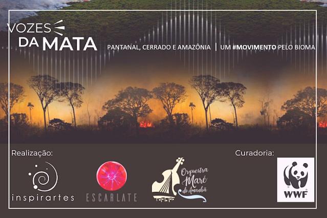 vozes da mata, uma expedição e um documentário que leva música ao Pantanal.