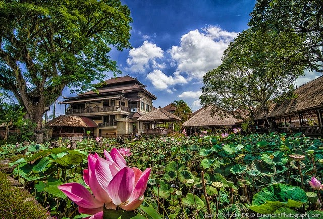 10 Places You Shouldn't Miss in Indonesia | Ubud, Indonesia.