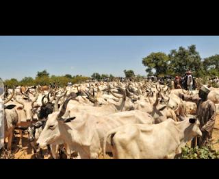 Screenshot 20200129 234917%257E2 - Enigu farmers community mourns as hardsmen destroy rice farm land worth 17m