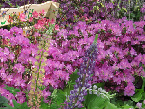 Philadelphia Flower Show - purple