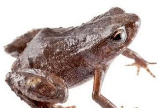 Ecuador tiene una nueva especie de rana andina