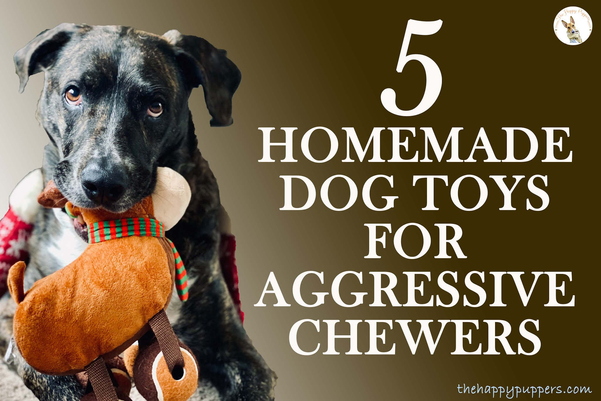 The 5 easiest HOMEMADE DOG TOYS for aggressive chewers