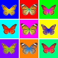 These butterflies thus constitute in fact naturally produced GMOs (Genetically Modified Organisms) during the course of evolution. This is symbolised here in an Andy Warhol-like style by the fluorescent colours on the Monarch pictures.