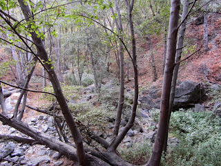 Riparian habitat in Fish Canyon along Fish Canyon Trail in autumn