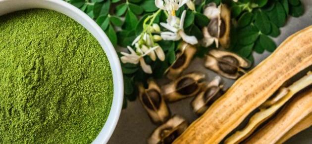 المورينجا +الفوائد +العلاج +الأعشاب
