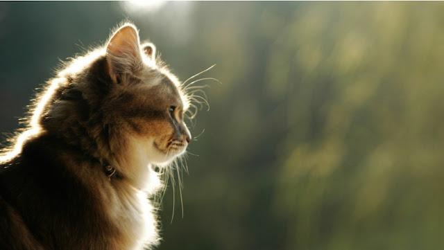 kucing menatap