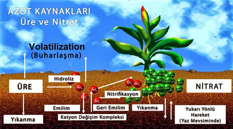 Tarım Siteniz: Hangi gübre ve element bitkiye ne gibi etki eder?