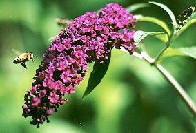 Sistem Reproduksi Pada Tumbuhan Bunga-Bunga