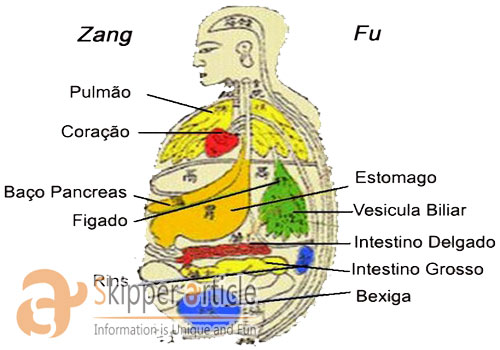 Understanding Internal Organs through Zang Fu Theory
