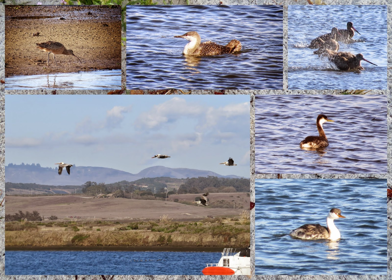 Birds at Moss Landing