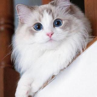 cara merawat kucing pemula