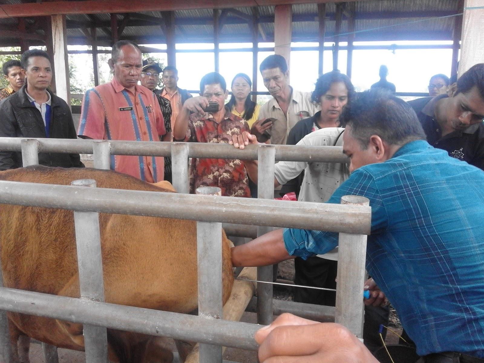 Kisah Sukses Peternak Sapi Indonesia di Selandia Baru Sebagai Inspirasi untuk Anda