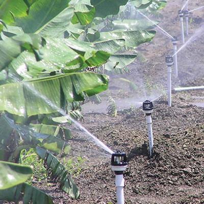 Elesbão Veloso: Moradora reclama de falta de água há vários dias na Baixa do Curral e denuncia uso em hortas, bananais, cocais e até em criatório de peixes